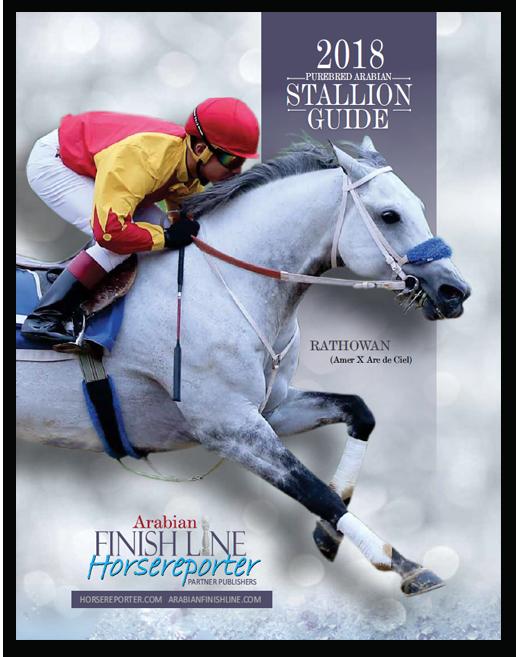 stallion-guide-2018